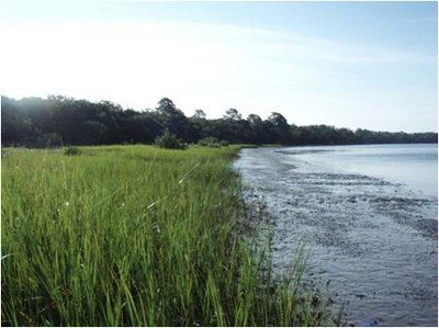 Restoring Coastal Fish Habitat Using Oysters, Mussels, and Marsh Grass at Guana Peninsula, FL