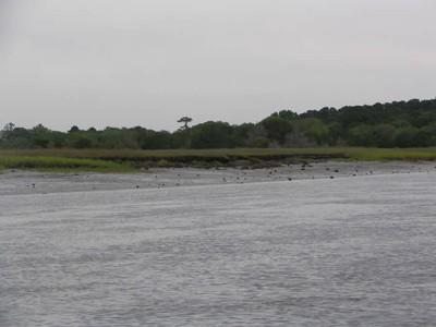 Shoreline and Spartina Marsh stabilization along the Atlantic Intracoastal Waterway, South Carolina