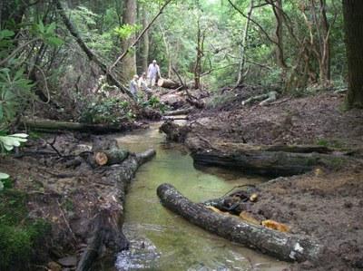 Pretty Branch Deflectors, Cooper Creek, Georgia