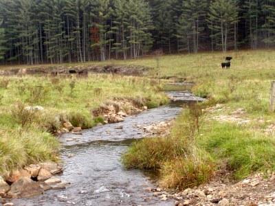 Whitethorn Creek, West Virginia