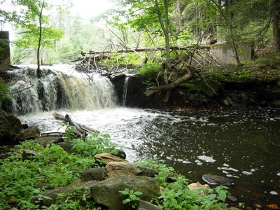 Dam to be Removed on Hamant Brook in Massachusetts