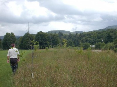 Riparian Restoration, Upper Browns Run, Lake Champlain, Vermont
