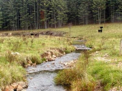 Photo of Whitethorn Creek, WV