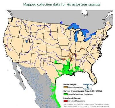 Mapped Collection Data for Atractosteus Spatula