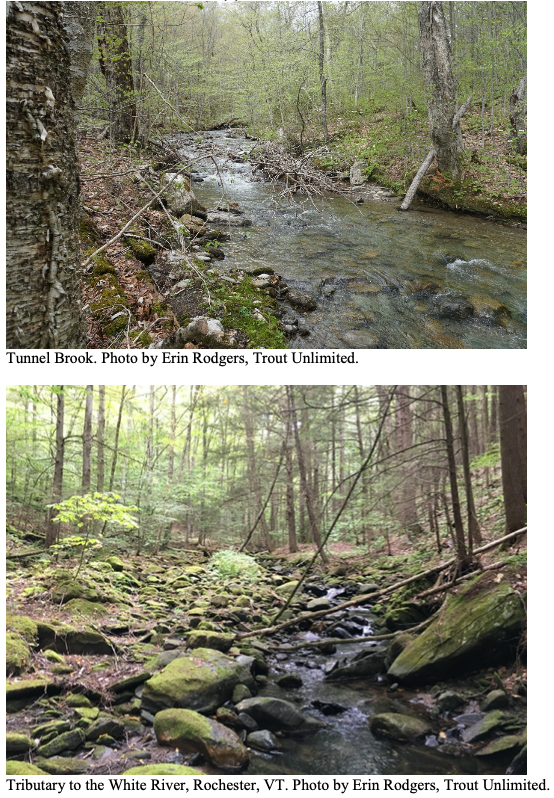 This project will address habitat diversity, quality, and quantity issues resulting from historic landscape use, sedimentation issues resulting from increased erosion as a cascading effect of historic land use, and thermal and velocity issues related to climate change.